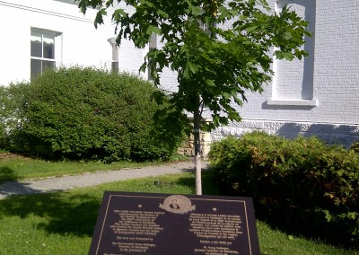 Lord Selkirk Sugar Maple Tree